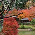 Photos: 秋色を見守る古き樹木