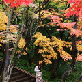 Photos: 秋色の下