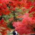 Photos: 紅葉デート♪
