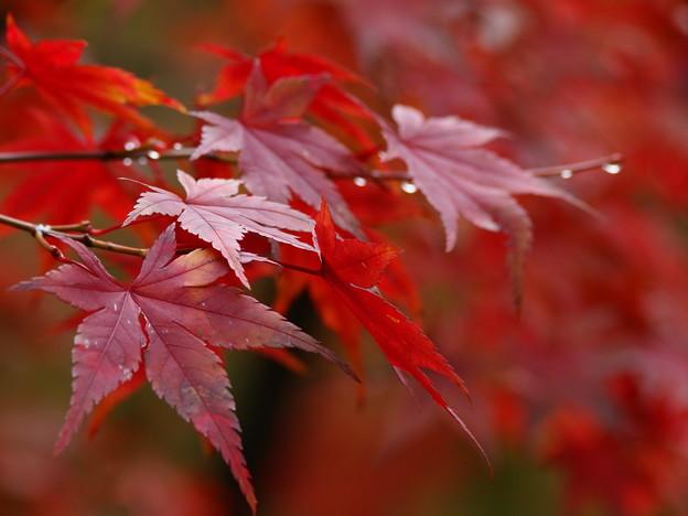 秋色に水滴キラリ☆
