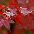 Photos: 秋色に水滴キラリ☆