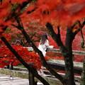 秋色の中の異邦人