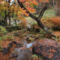 水辺の秋色