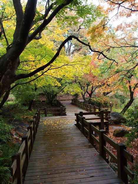 秋色に覆われた歩道