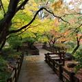Photos: 秋色に覆われた歩道