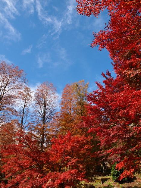 晩秋の青空と秋色と