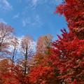Photos: 晩秋の青空と秋色と