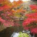 LEICAの見た日本の秋色