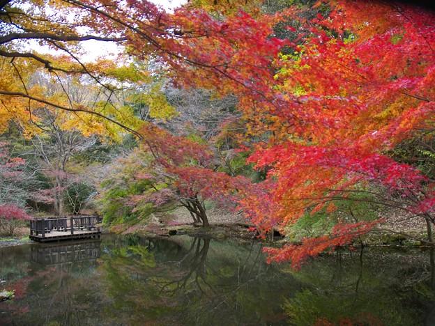 LEICAの見た日本の晩秋