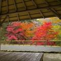 Photos: 垣間見た秋色