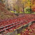 Photos: 落ち葉に覆われた…