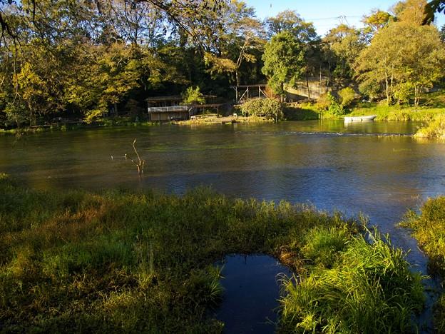 晩秋の朝の湧水