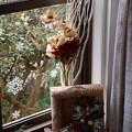 Photos: 窓辺の彩り