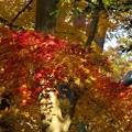 過ぎ去った秋色を偲ぶ