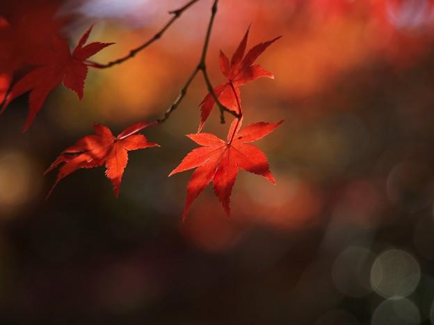 在りし日の秋色