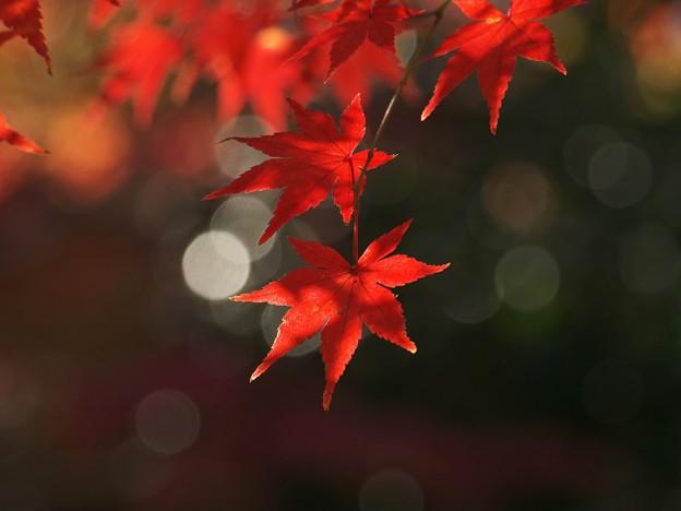 キラキラ☆と秋色と