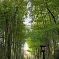 竹林の小径は異国人で溢れ…