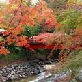 Photos: 過ぎ去った秋色を偲ぶ