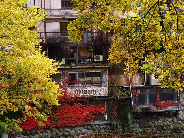 秋色が這いずり回る家
