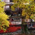 Photos: 秋色が這いずり回る家