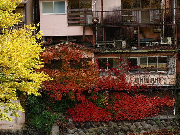秋色に覆われた壁