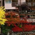 Photos: 秋色に覆われた壁