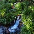 Photos: 滝壺の湧水