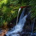 Photos: 滝壺に湧き出る