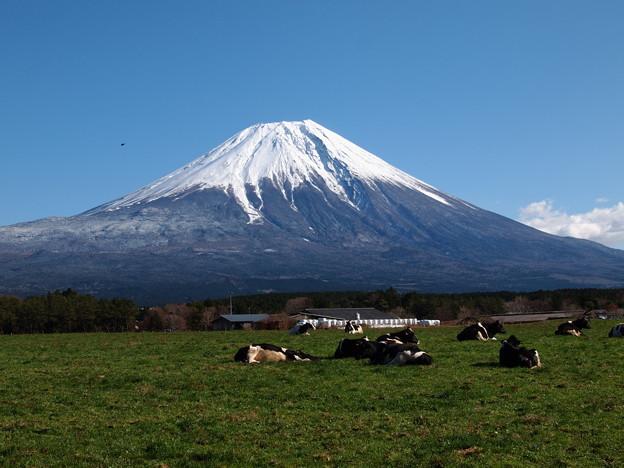牛さんの居る情景