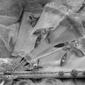 Photos: 蝶々夫人になれるかも?