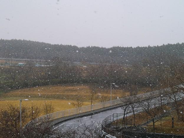 雪は降る、梅園の元でも