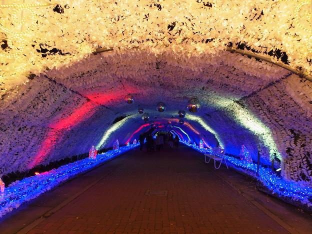 光のトンネル in 時之栖