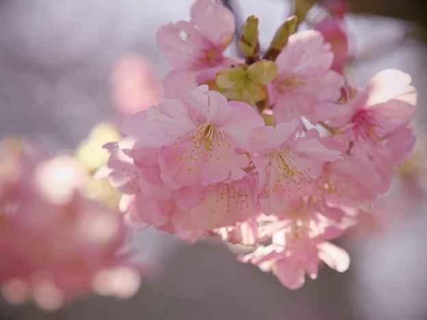 せせらぎの小径は春の気配♪