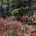 Photos: 梅花咲いた、桜も咲いた…