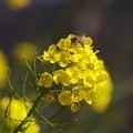 春の香りの訪問者