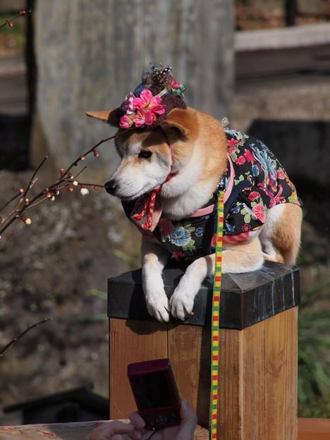 アタシも梅花を見に来たんだよ…