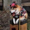 Photos: アタシも梅花を見に来たんだよ…