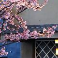 Photos: さくら咲く宿の灯火