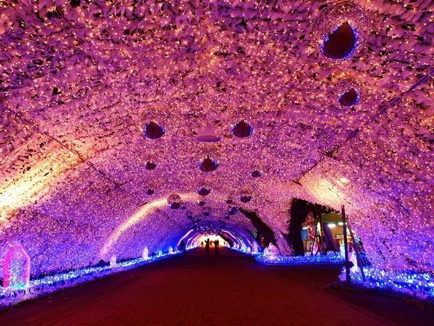 光のトンネル~時之栖