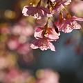 柿田川公園にも春の足音が…