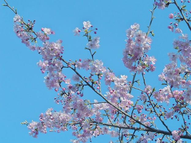早春の青空