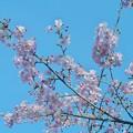 Photos: 早春の青空
