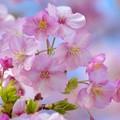 Photos: 春、香る