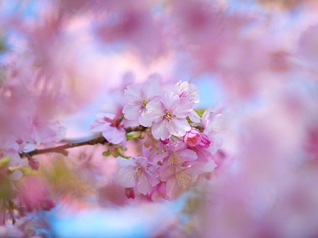 花びらに覆われて