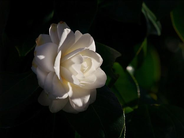 春の花びら朝陽を浴びて