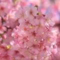 春の風、春の香り