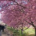春の香りを感じて