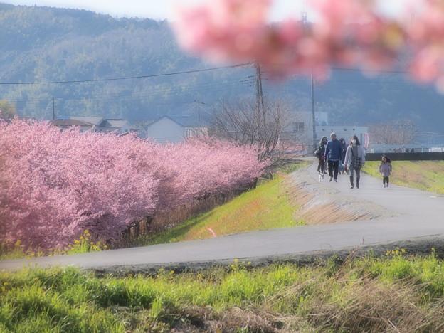 春を感じる散歩路