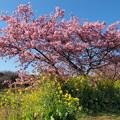 春の色、春の香り