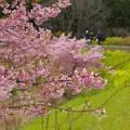 春を迎えたせせらぎ公園はいま